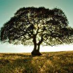 Tree-top tree-NOC