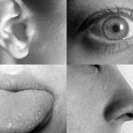 Mythbusters: Do humans only have five senses?