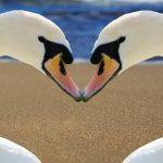 Monogamy in the Animal Kingdom