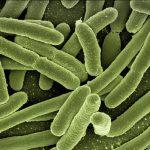 Freezing Faeces – A call to preserve our ever decreasing microbiome