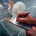 Animal Testing: Is it justified?