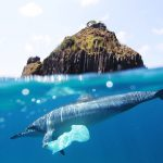 NU Academics discover  plastic waste in the sea