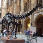 Sight at the museum: Dippy comes to Hancock