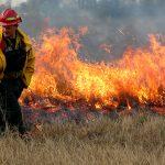 Politicians' response to Australian bushfires
