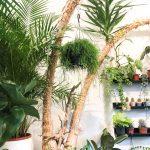 Poembox: Plant