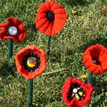 Newcastle remembers with knitted poppy tribute