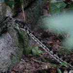Large Australian python found in Jesmond Dene