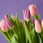 Spring blossoming: flowers of the season