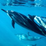 Dolphins have human-like personality traits, study finds