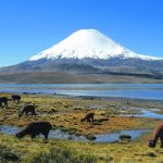 Yellow warning given for Chile volcano expedition