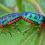 Brainwashed Bugs