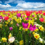 Is the Spring Budget more than flowery rhetoric?
