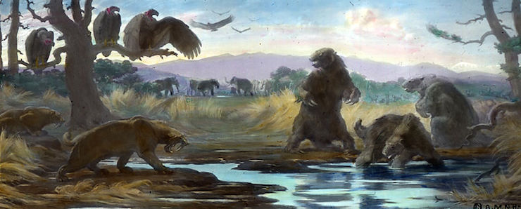One sloth (Mylodon, now Paramylodon) trapped, two guarding against Sabre Tooth (Smilodon fatalis). Image: Charles R. Knight, via Wikimedia Commons