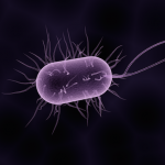 Can We Stop the Antibiotic Resistance?