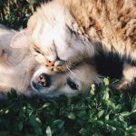 Research purrroves pets are beneficial to health