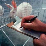 Animal Testing: Is it justified?