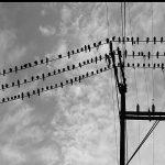 Golden Oldie: The Birds (1963)