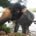 Sri Lanka: the country that stole my heart