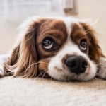 Time to remove the dog-ma on depression in our canine friends