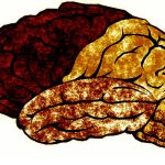 Has brain study crossed a line?