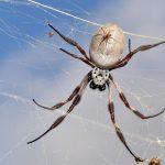 Spider-man inspired alternative to surgical stitches?