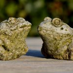 Chytrid Fungus is not the only cause of amphibian decline