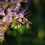 Scientists propose an innovative new biodiversity target