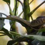 Snakes and Apps: The digital age's answer to snake encounters in India