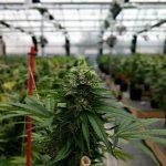£1 million cannabis farm found in a Newcastle warehouse