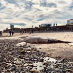 Why whales strand: The story of Humpy the humpback whale found dead on Northumberland beach